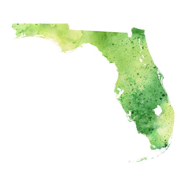 Watercolor Map Of Florida  In Green Painting by Andrea Hill Florida Painting   Watercolor Map Of Florida  In Green by Andrea Hill