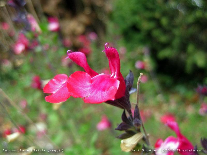 What Do Leaves Do Flower
