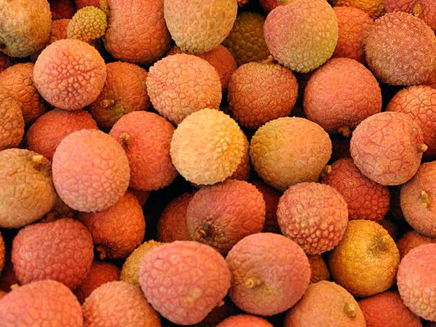 リカシティの果実 - 害と利益