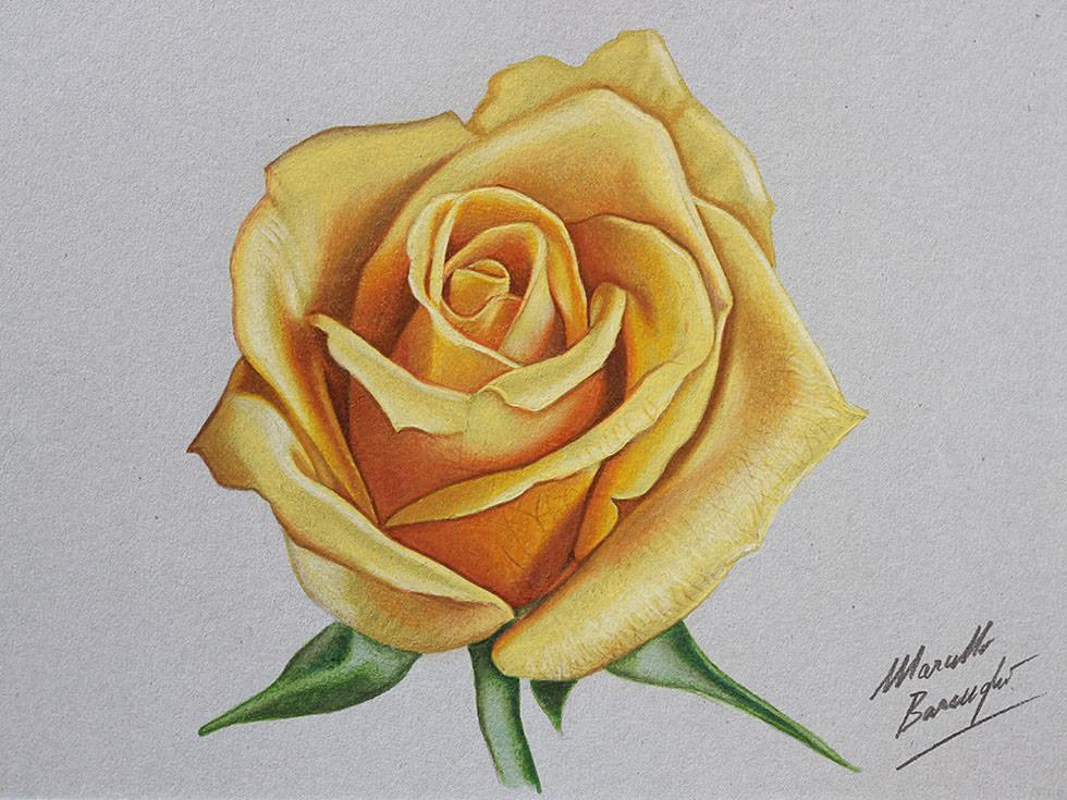 10+ Rose Drawings - JPG Download