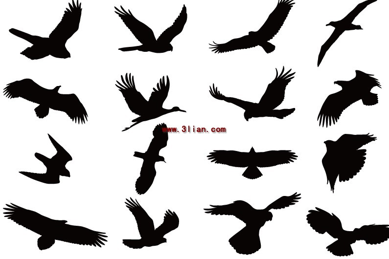 Siluet Burung Terbang Vektor Hewan Vektor Gratis Download Gratis
