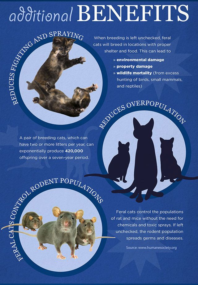 The Benefits Of Feral Cat Tnr Programs Vs Euthanasia