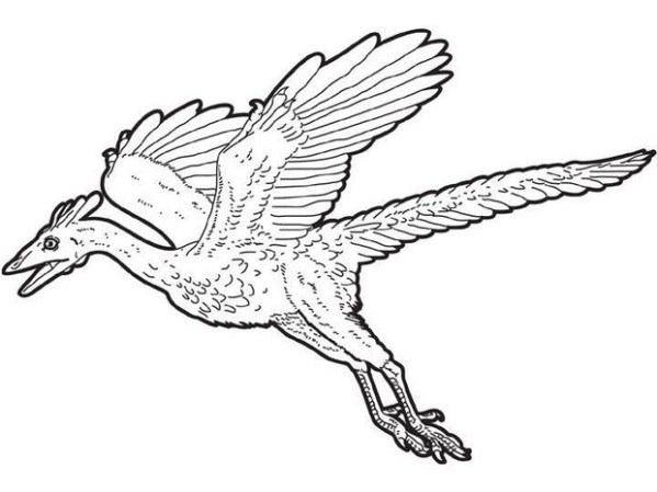 pterodactyl coloring page # 9