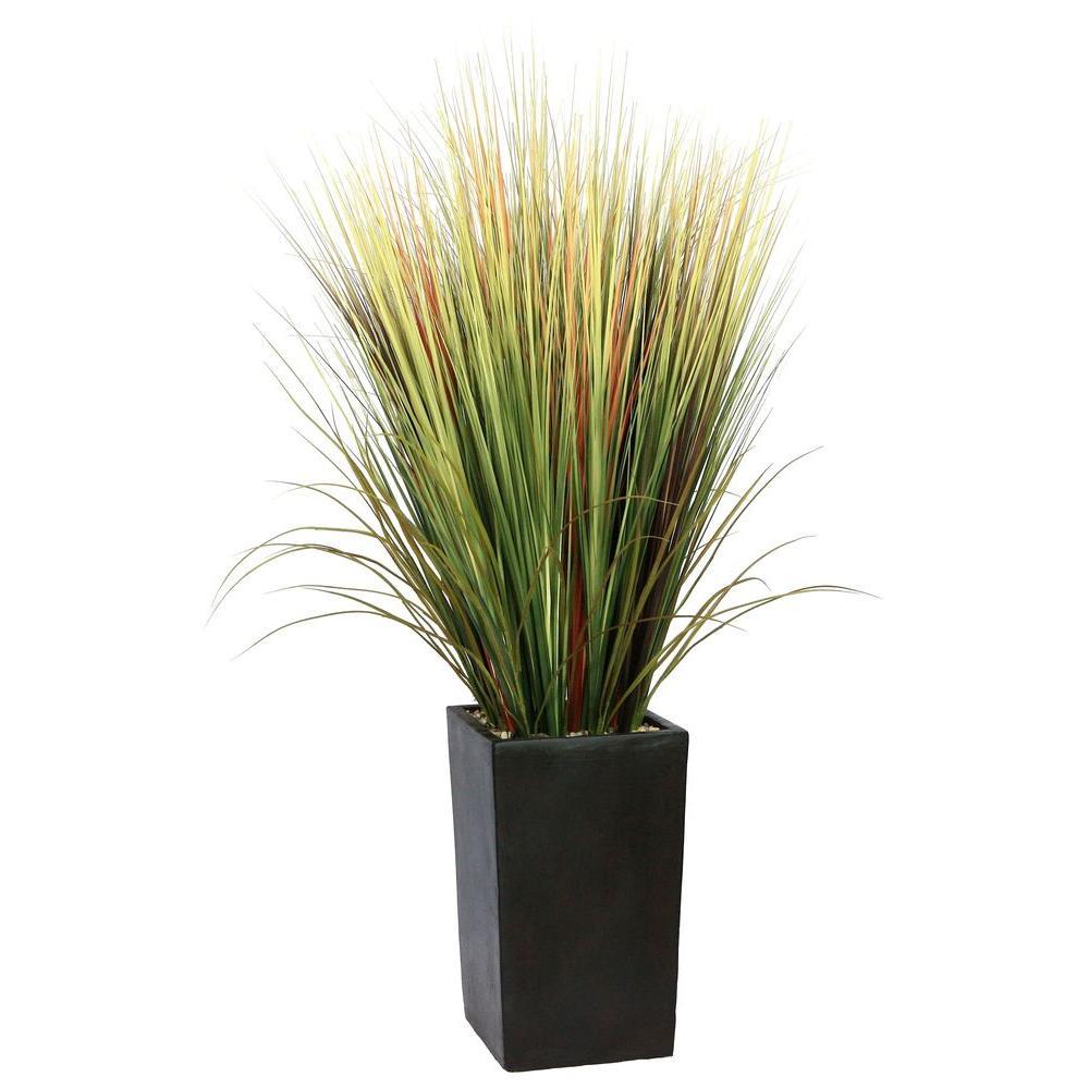 Tall Office Plants