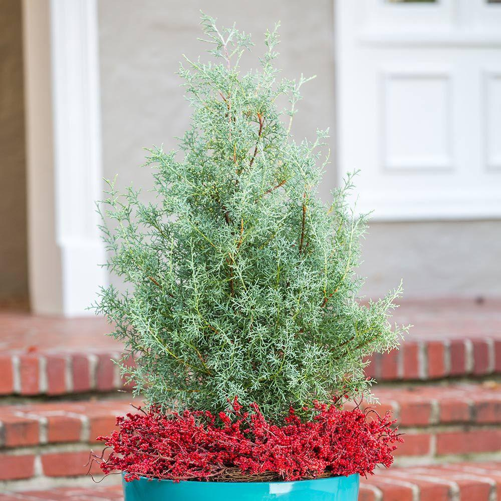Outdoor Christmas Decorations Home Depot