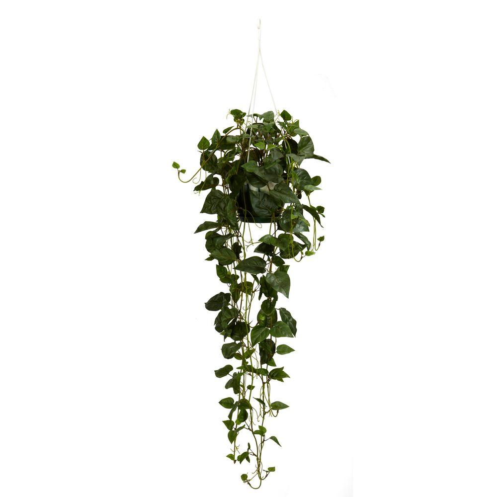 Hanging Plants Ceiling