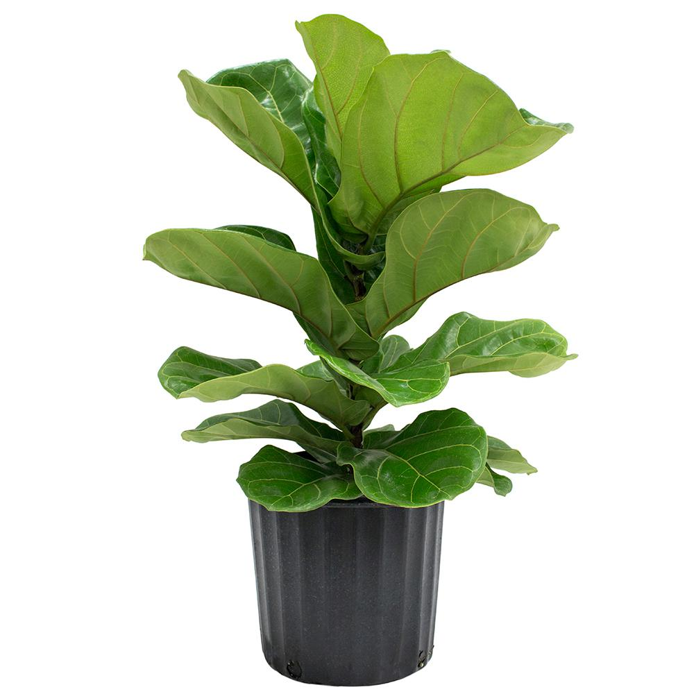 Outdoor Plant Decorations