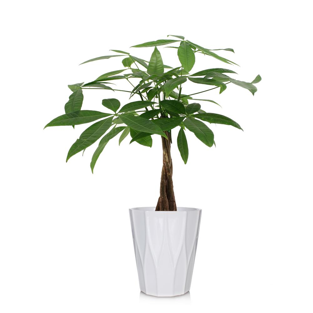 Does Plant Home Trees Depot