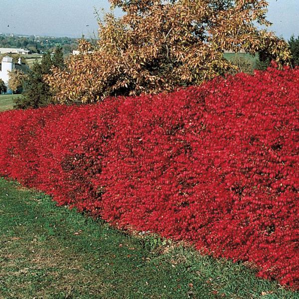 burning bush # 2