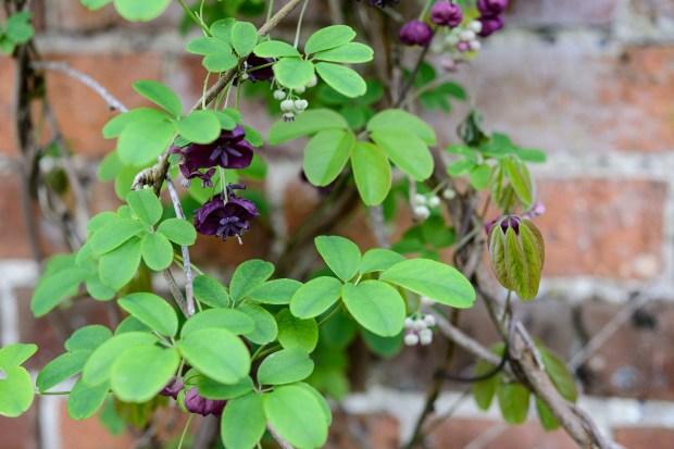 Evergreen Plants Virginia