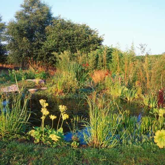 How Build Bog Garden Uk