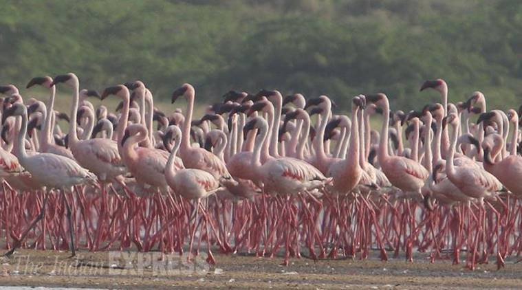 Bnhs To Commence Flamingo Mitigation Efforts Cities News