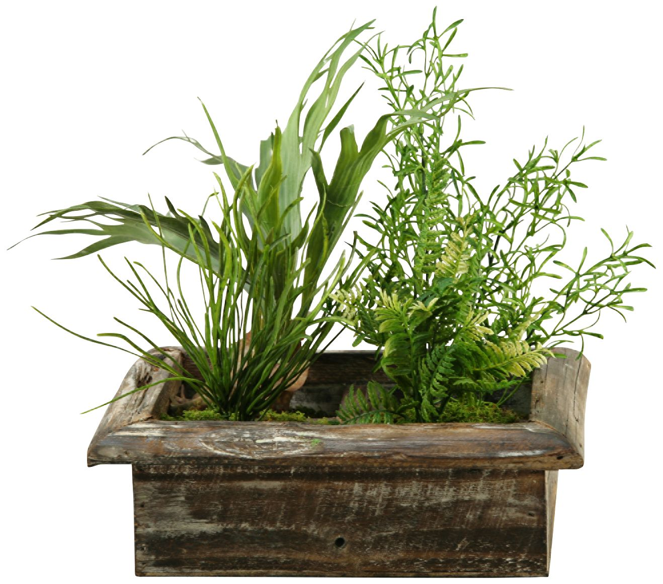 Mini Staghorn Fern And Wild Asparagus 19 Quot W Faux Plant