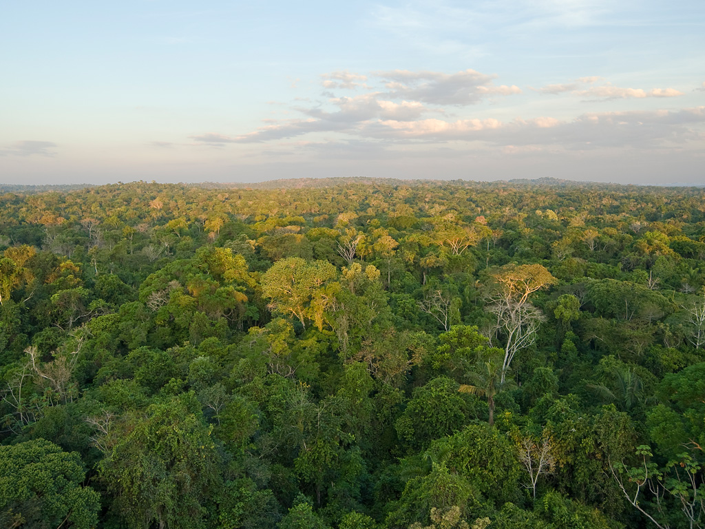 Map Amazon River Forest Amazon And Rain