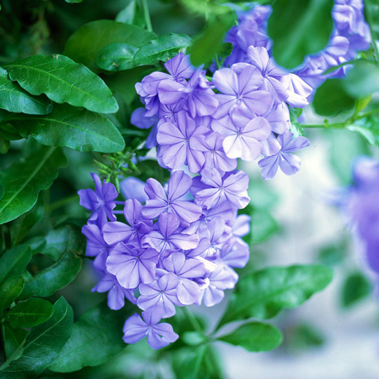 The Best Heat Tolerant Plants For Decks And Patios