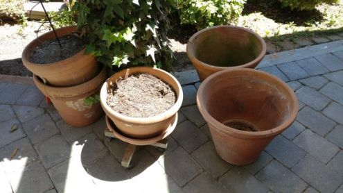 Large Terracotta Planters for Sale in Kirkland  WA   OfferUp