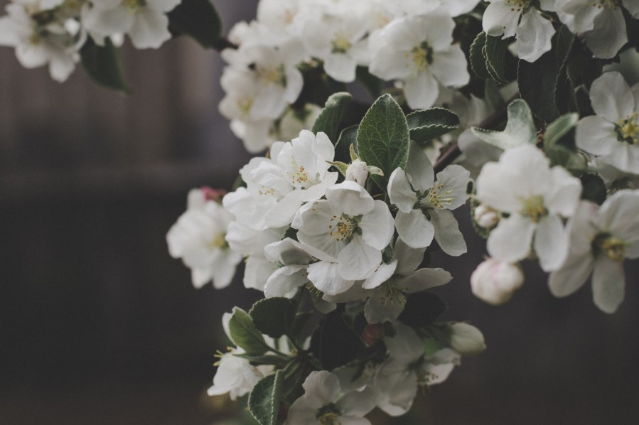 1000  Beautiful White Flowers Photos      Pexels      Free Stock Photos White Flowers Macro Shot