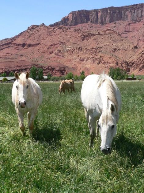animal ranch - HD1200×1600