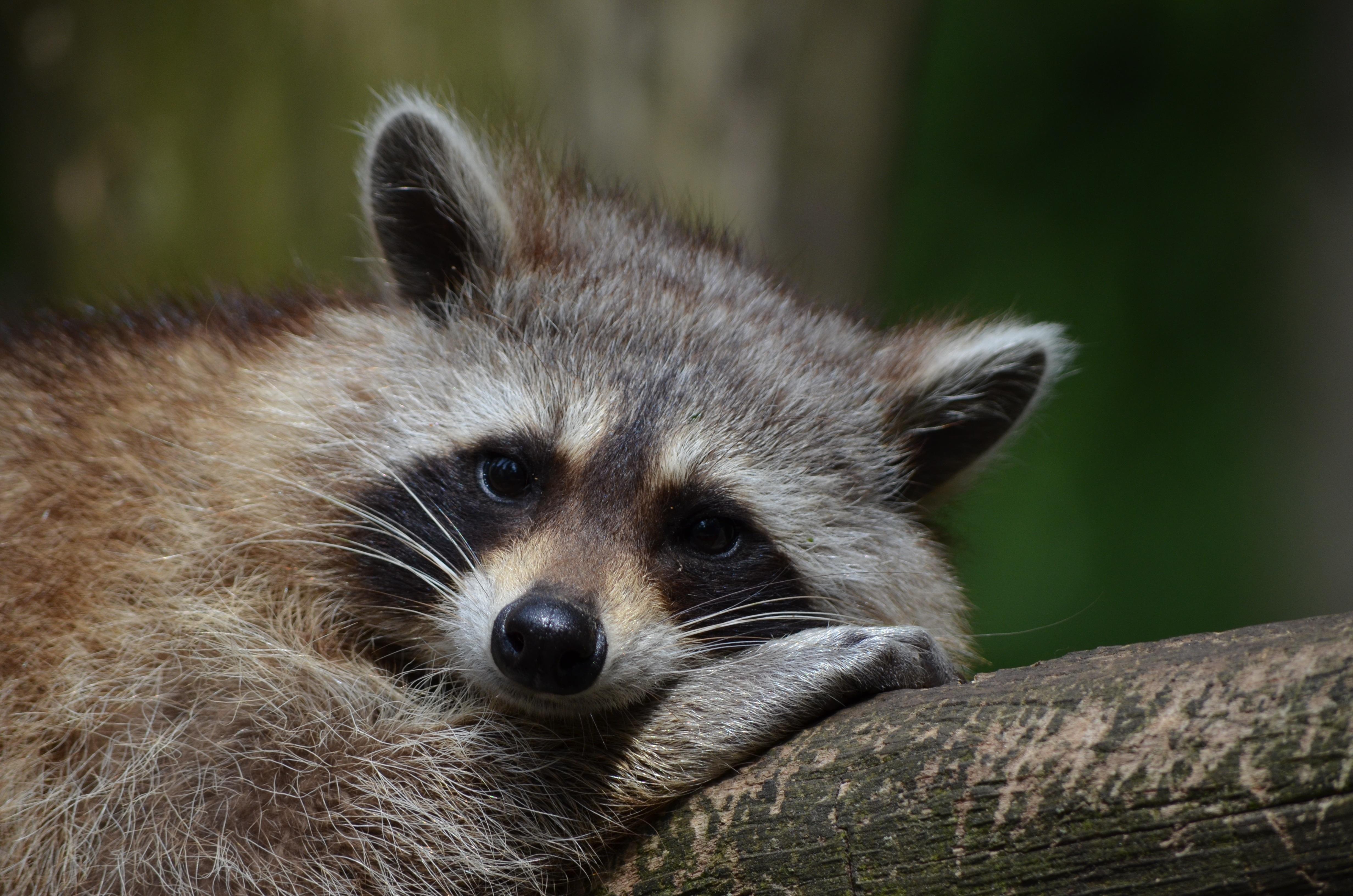 Free Stock Photo Of Animal Cute Hedgehog