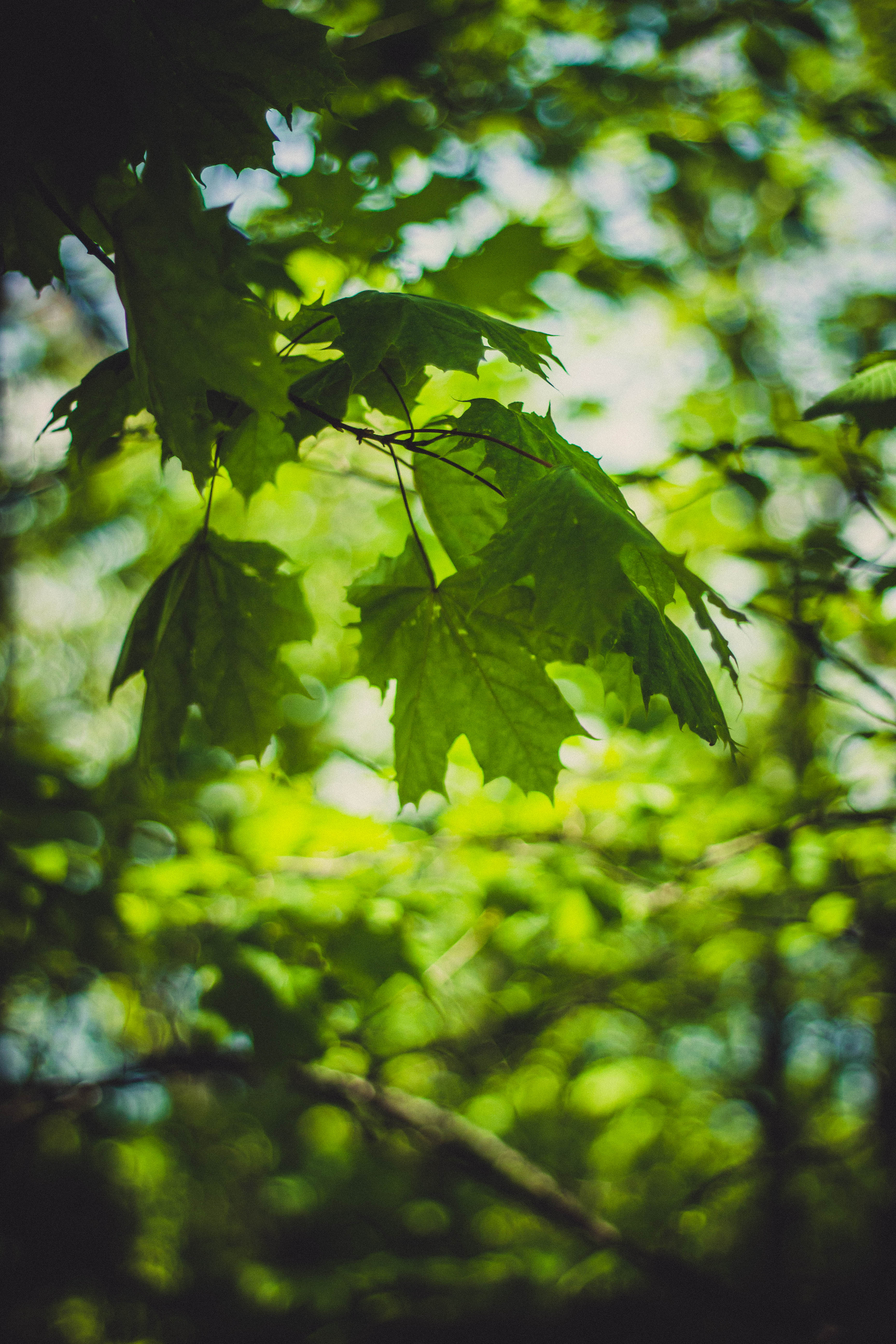 Green And Orange Leaves Focus Photography 183 Free Stock Photo