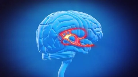 Stock Video: Brain part - LIMBIC SYSTEM ~ #20467174   Pond5