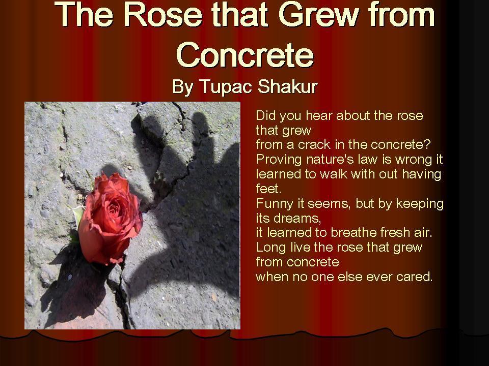 Rose Concrete Tupac Quotes
