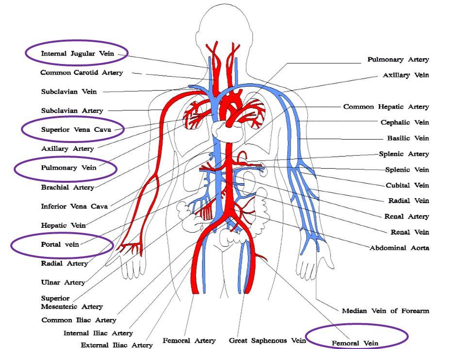 circulatory system definition - 780×780