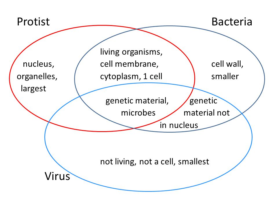 cell and virus venn diagram - Tosya.magdalene-project.org Diagram Of Wiring on