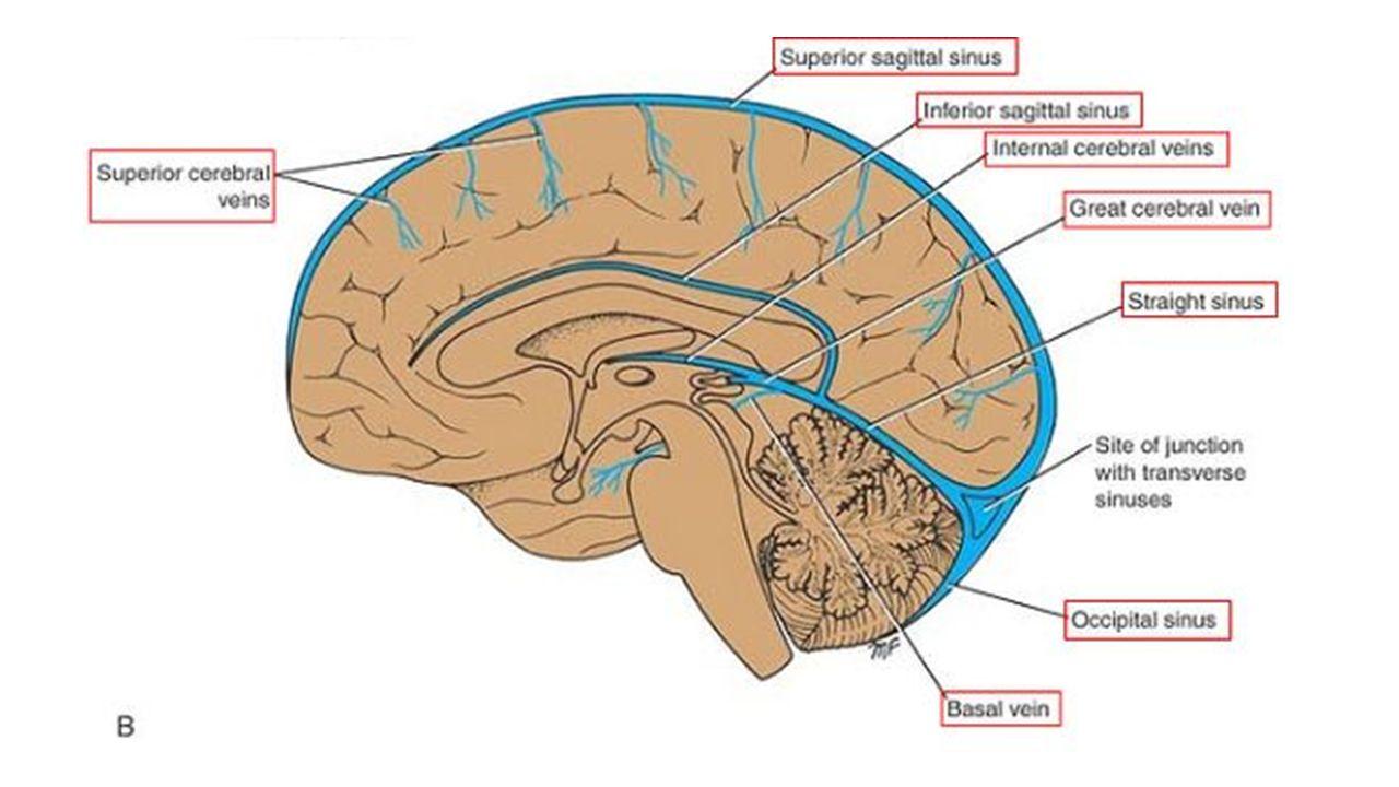 Internal Brain Diagram Flipped Left Diy Enthusiasts Wiring Diagrams