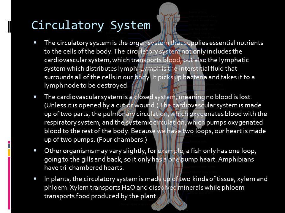 circulatory system organs - 960×720