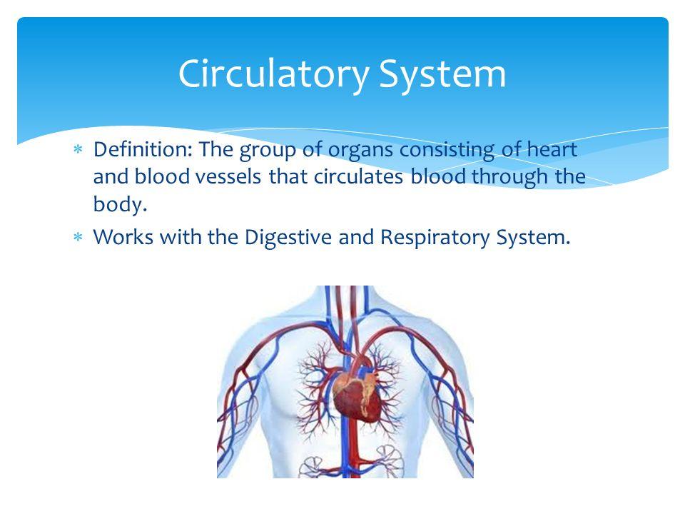 circulatory system definition - 960×720