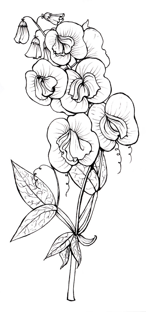 sweet pea coloring pages # 37