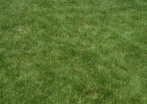 Lawn Landscape Design