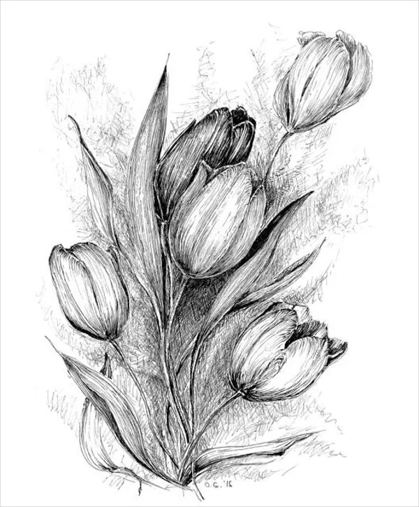 19  Flower Drawings   Free PSD  AI  EPS Format Download   Free     Tulip Flower Drawing