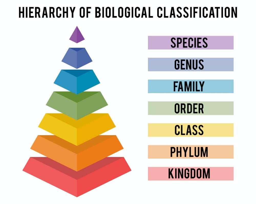 Taxonomic Order