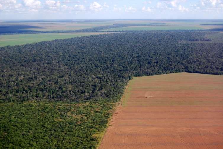 amazon rainforest deforestation - HD1200×857