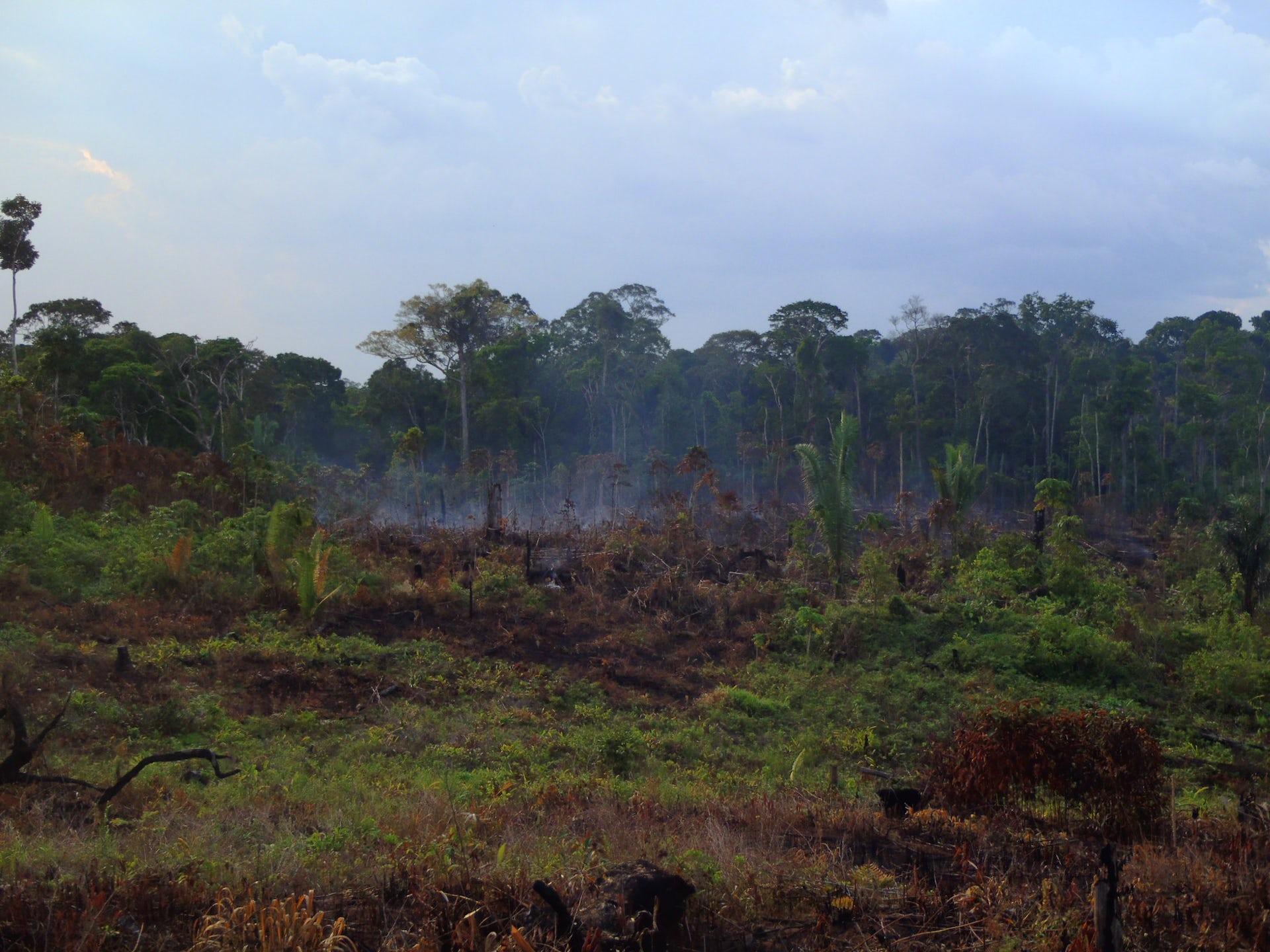 amazon rainforest location - HD2048×1536