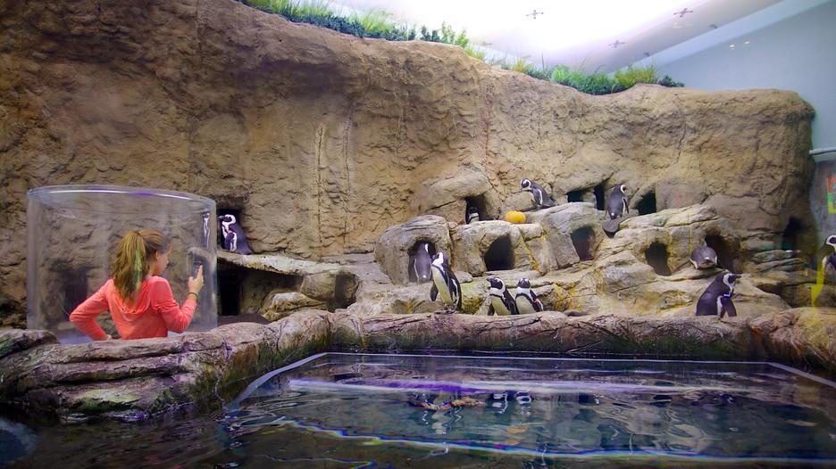 Ripleys Aquarium Pigeon Forge