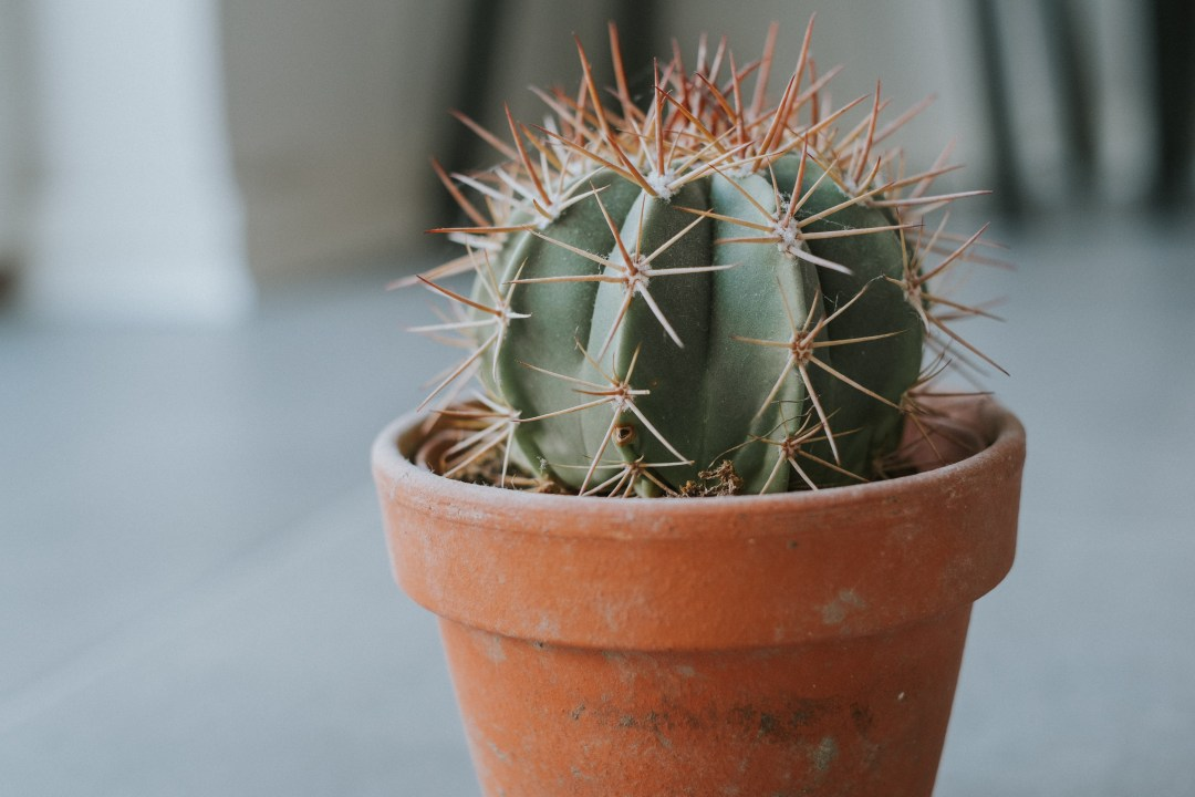 Cactus On Plant Pot In Shallow Focus Lens Photo Free