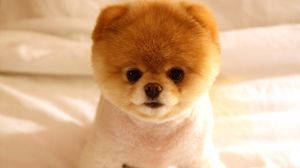 Puppy wallpapers hd  desktop backgrounds  images and pictures     Preview wallpaper puppy  muzzle  cute  fluffy