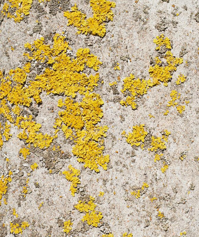 Mustard Yellow Wall Art