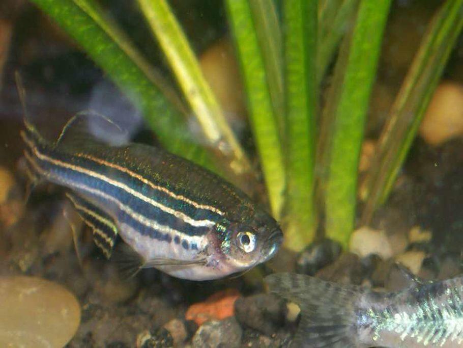 Aquadude420's Freshwater Fish Photo (ID 10800) - Full ...