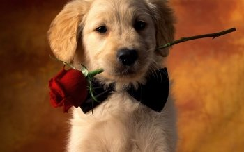 929 Puppy HD Wallpapers   Background Images   Wallpaper Abyss HD Wallpaper   Background Image ID 678636