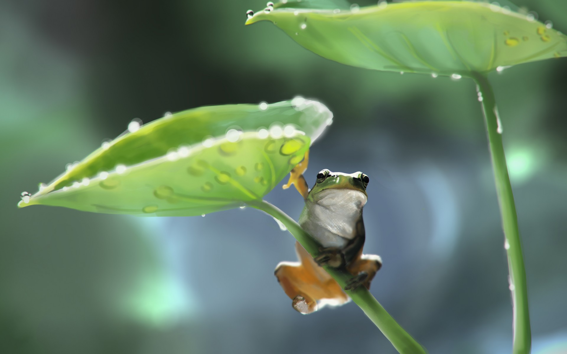 Tree Frog HD Wallpaper | Background Image | 1920x1200 | ID ...