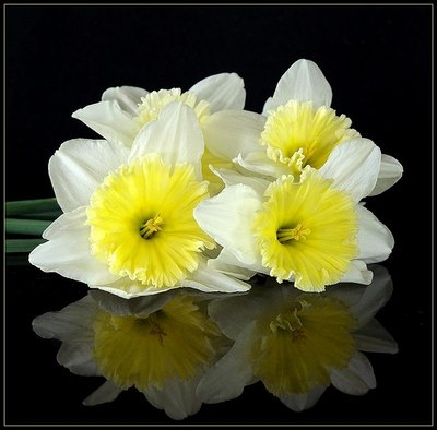 Types of Easter Flowers  with Pictures    eHow Narcissus