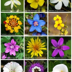 Types of Indian Flowers   USA Today A poster with twelve flowers of different families