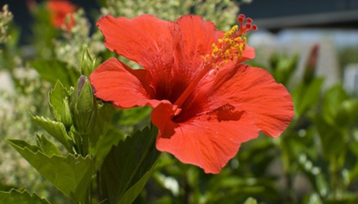 Indian Flower Names   Garden Guides Flowers from around the world grow in India