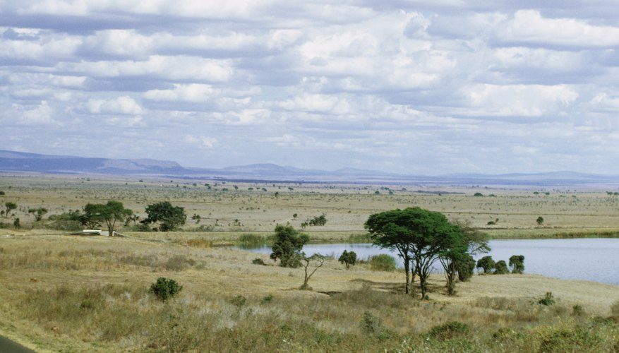 Are Located Where Savannas African