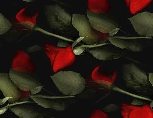 Romantik Gul En Resimler
