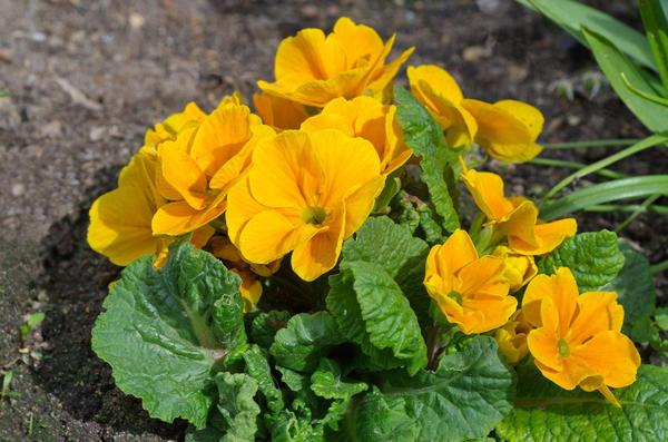 Стоит ли сеять просроченные семена - решать только вам